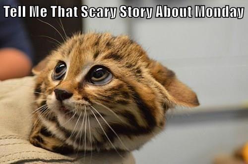 animals scary sunday sleep story Cats monday