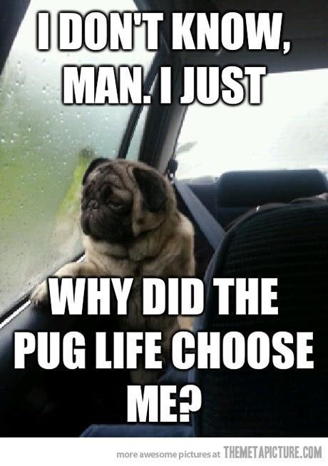 Introspective pug Questions His Existence… Pug Life Funny mercials Funny Ads