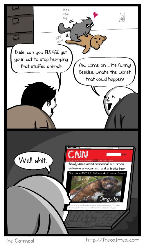 An Olinguito ic by The Oatmeal