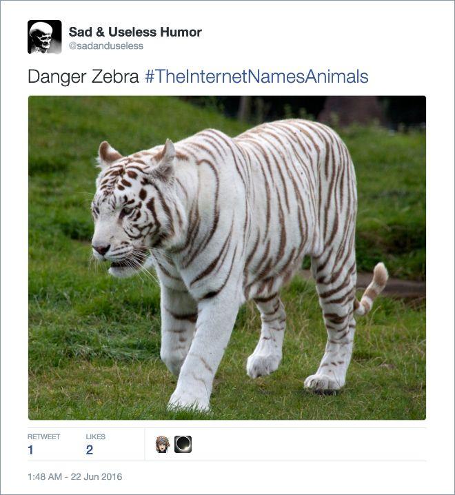 animal danger zebra