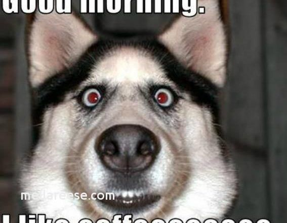 Funny Good Morning Quotes Unique Funny Good Morning Quotes Luxury Lovely 0d Morning Fuckers Wwwalex