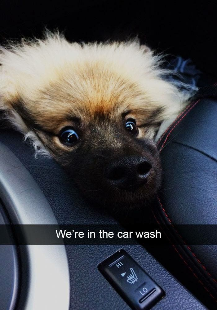 Silly Dogs Funny Dogs Funny Animal Memes Animal Funnies Funny Animals Dog Snapchats Funny Snapchat Funny Dog Wiener Dogs