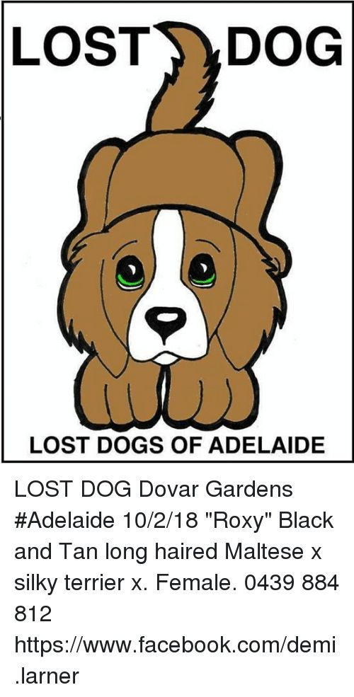 Dogs and Memes LOST DOG LOST DOGS OF ADELAIDE LOST DOG Dovar