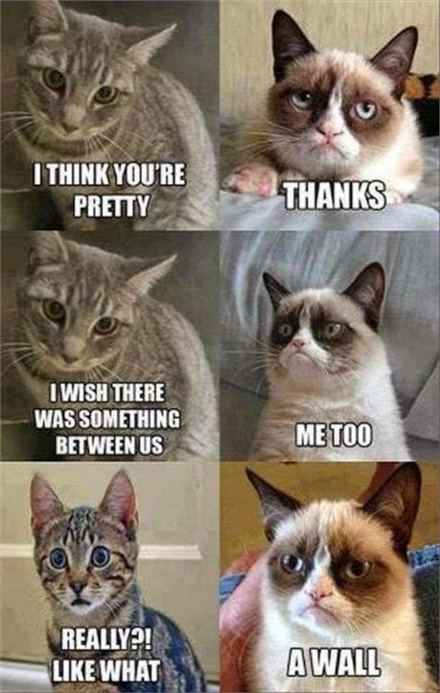 funny grumpy cat at it again 4402