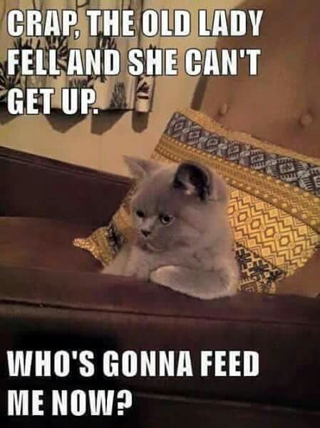 My cat one day All about food