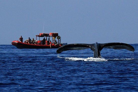 Maui Whale Watching Tour by Raft