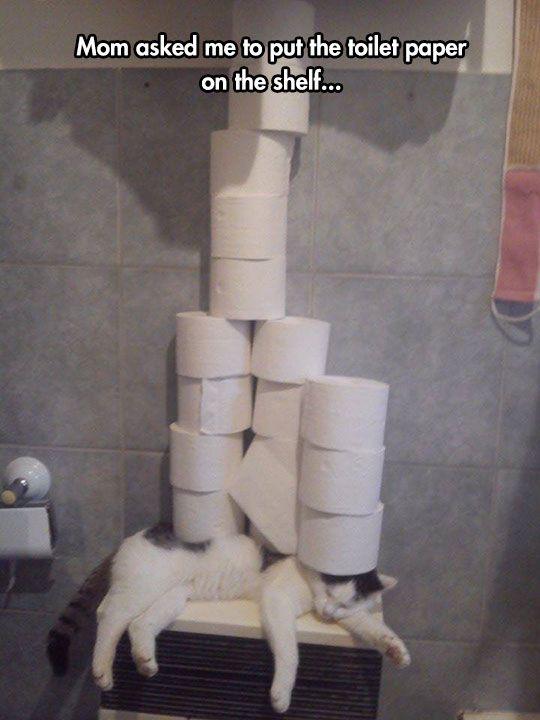 funny cat sleeping bathroom toilet paper pile