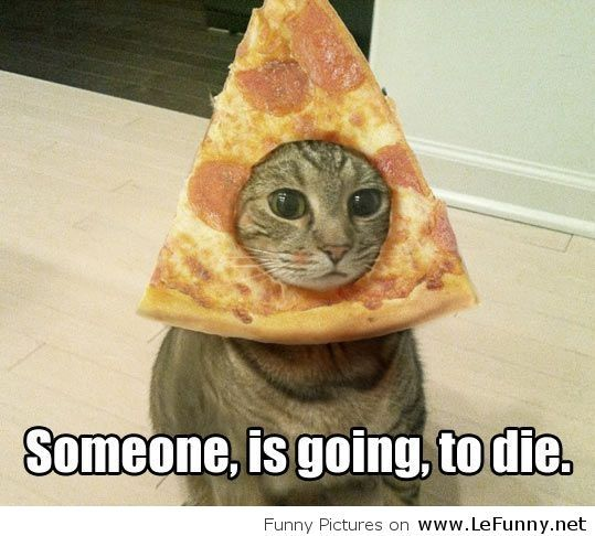 Watch the Luxury Funny Cat Pictures with Captions Halloween