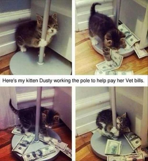 kitten working the pole
