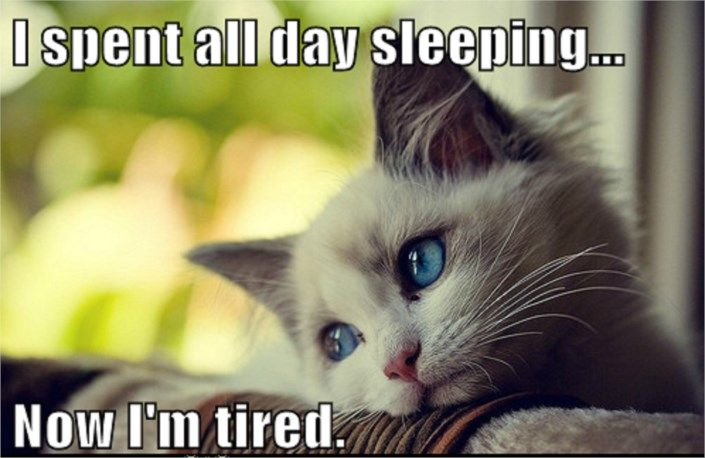 Funny Animal Memes First World Cat Problems Sleep The Pain Away