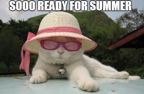 Ready for summer cat funny ready for summer cat 9ae704