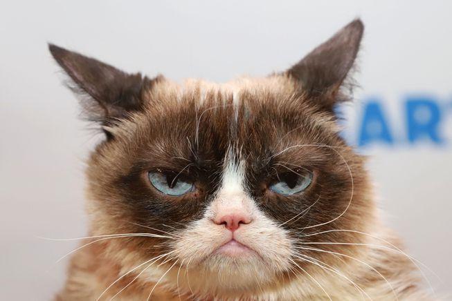 viral cat