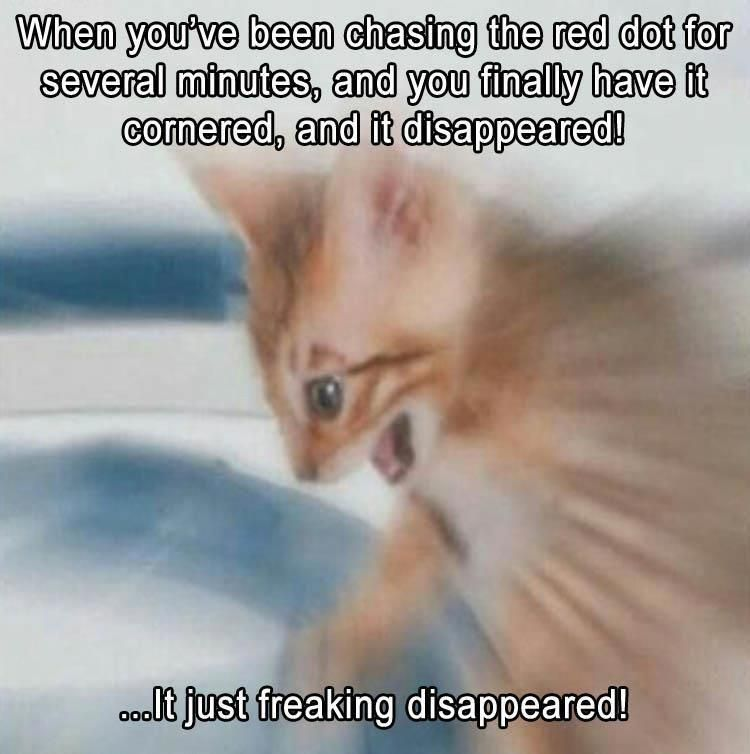 Funny Animal The Day 18 funnycatpics