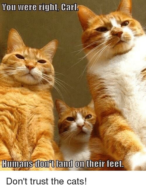 Cats Advice Animals and Feet You were right Carl Humans donot land
