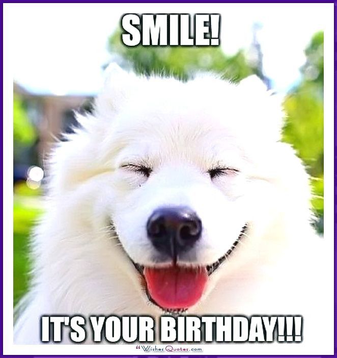 Cute Cat Birthday Meme Unique Happy Birthday Memes with Funny Cats Dogs and Cute Animals