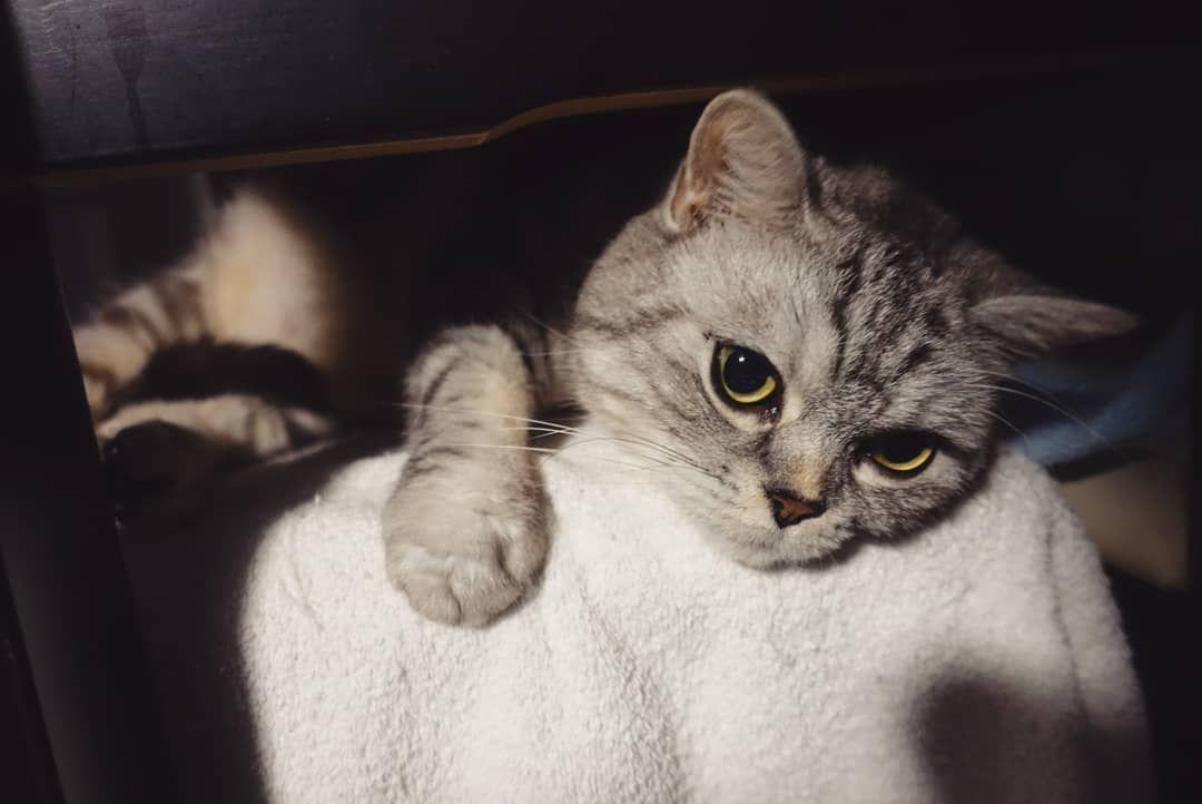 ilovemycat kissa catstagram catworld lovecats cutepets instagramcats kot chat ねこ好き çŒ å¥½ã camera 日常 funnycat hello goodnight