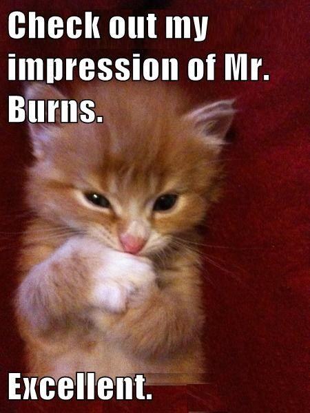 kitten mr burns impressions cute the simpsons