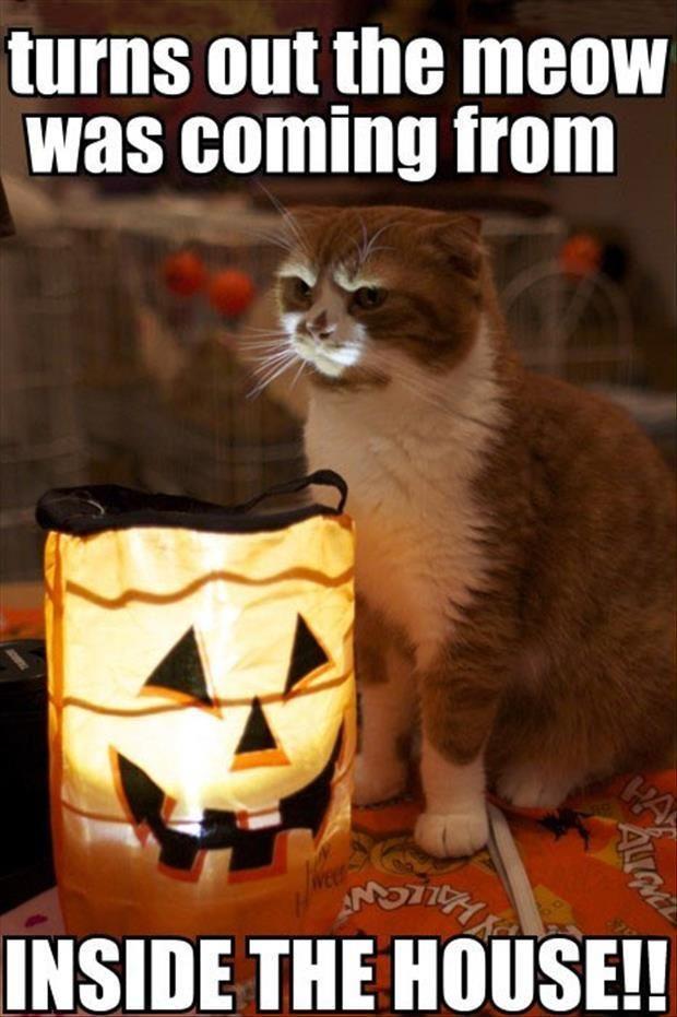 funny animal pictures 9 gatos Pinterest