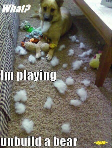 I WANT THAT DOG Animal Captions Animal Memes Funny Animals Animal Humor