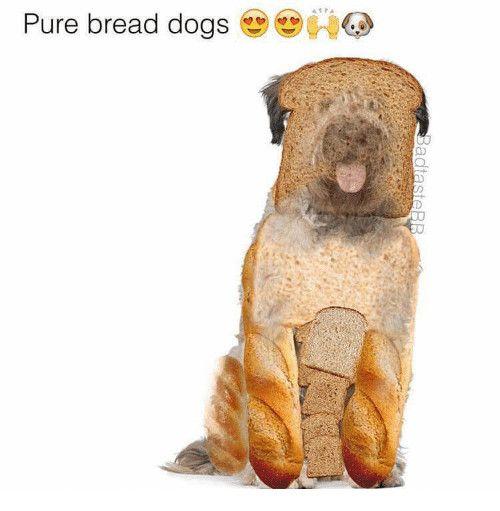 41 Pa Pure Bread Dogs 0 0d Adtastedog Meme Funny