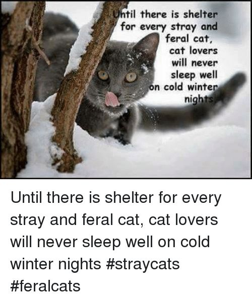 Memes 🤖 and Til til there is shelter for every stray and feral