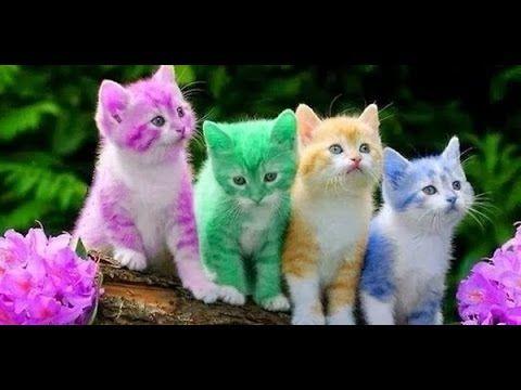 Funny Cat Videos Funny Animal Funny Cat Funny Animals pilation