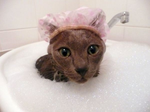 Watch the Prodigious Funny Cat Pictures Email