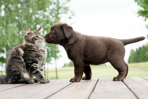 Is Cat Poop Bad for Dogs