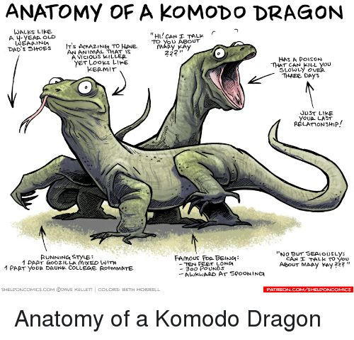 College Funny and Pop ANATOMY OF A KOMODO DRAGON WALKS LIKE HI