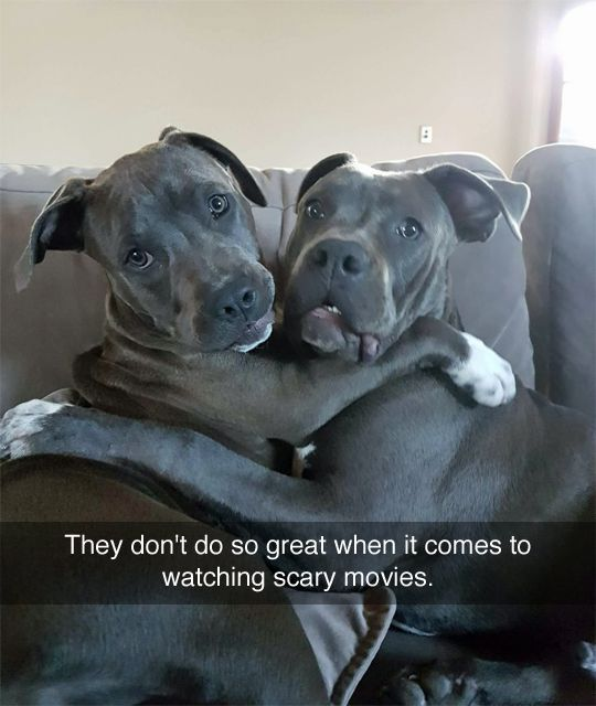 Watch the Prodigious Funny Dog Tumblr Pictures