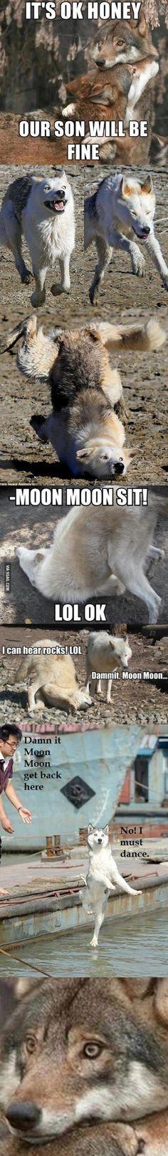 Dammit Moon Moon Cute Funny AnimalsFunny