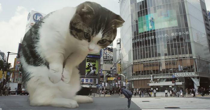 This Guy shops Cats Into Giants And The Result Is Meow nificent