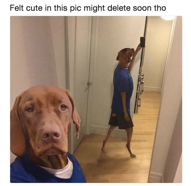 13 This doggo who was just feeling himself