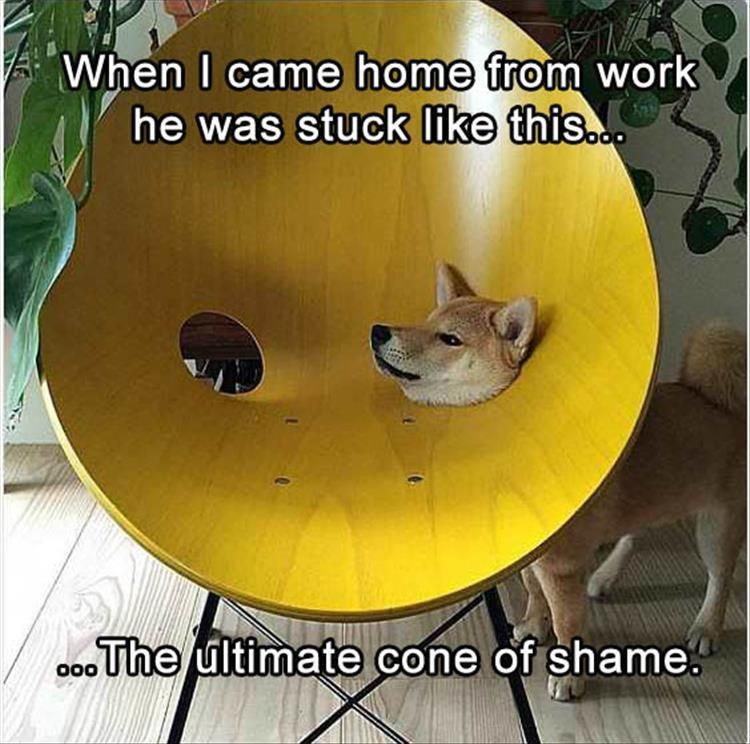 Watch the Shocking Funny Dog Pictures Captions