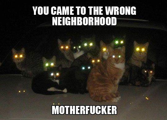 funny scary cats eye lights