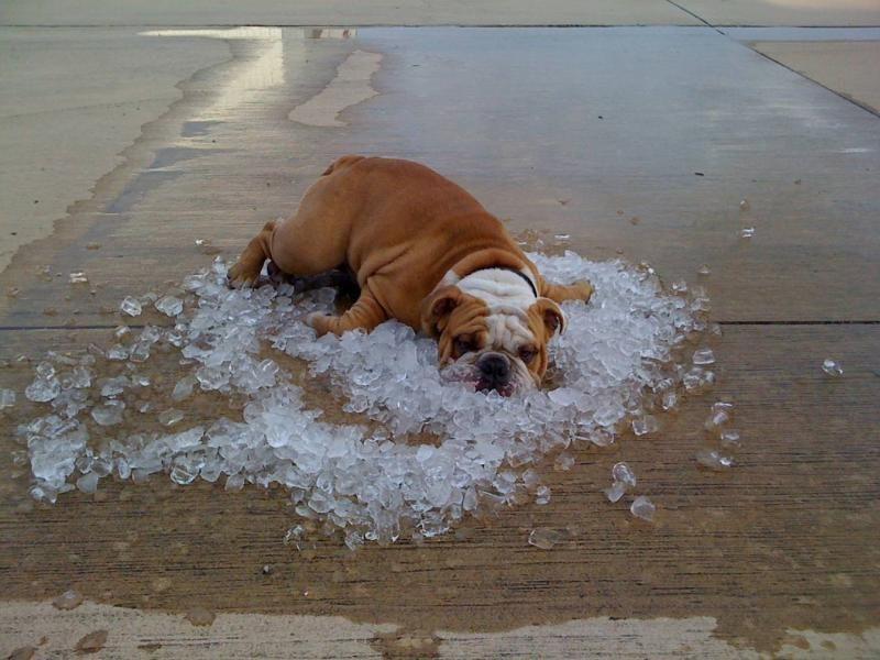 Bulldog Air Conditioning