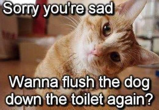 Posts Details Tags Funny cat Sorry youre sad Categories Funny animal memes jokes and pictures