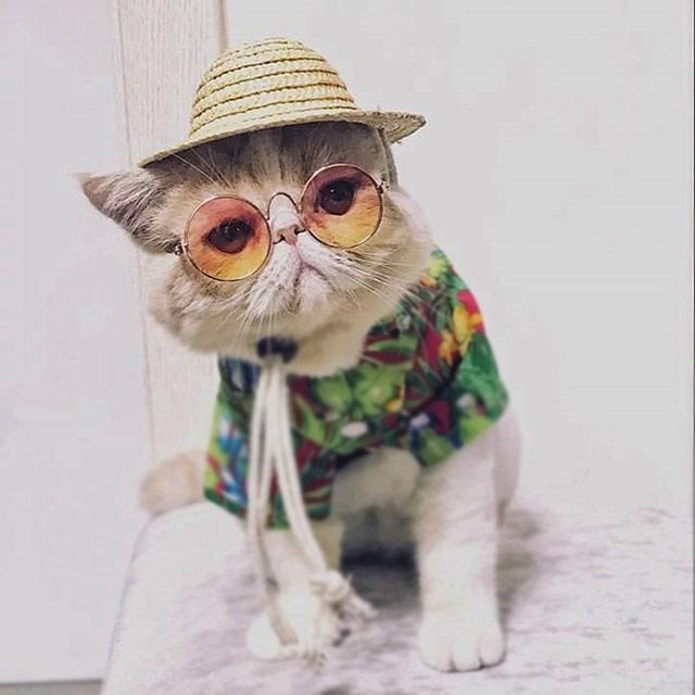 Funny Cat Sunglasses Summer Fashion Pet Props Eye wear Sunglasses for Small Puppy Dog Grooming Accessories Color Optional