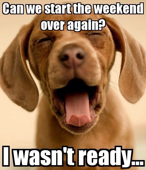 Cute Dog Memes Funny Dogs Iphone Wallpapers