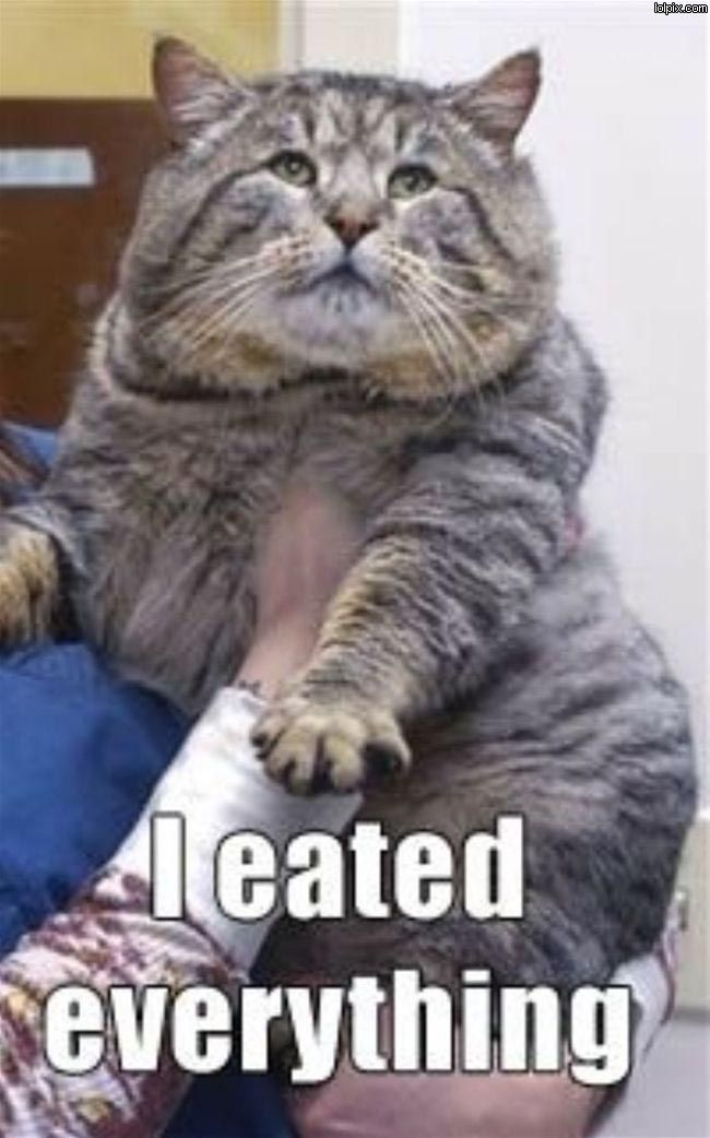 16 funny fat cat pictures inspiring us to