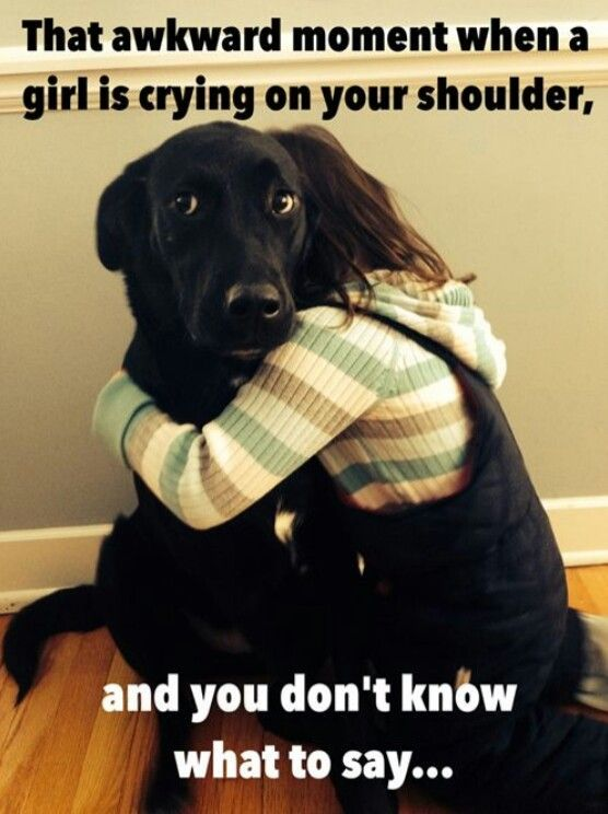 Human Grade Dog Food Dog Insurance Cat Memes Funny Dog Memes Funny