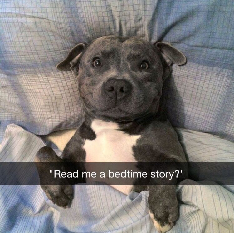 Dog Snapchats Adorable Animals Zoo