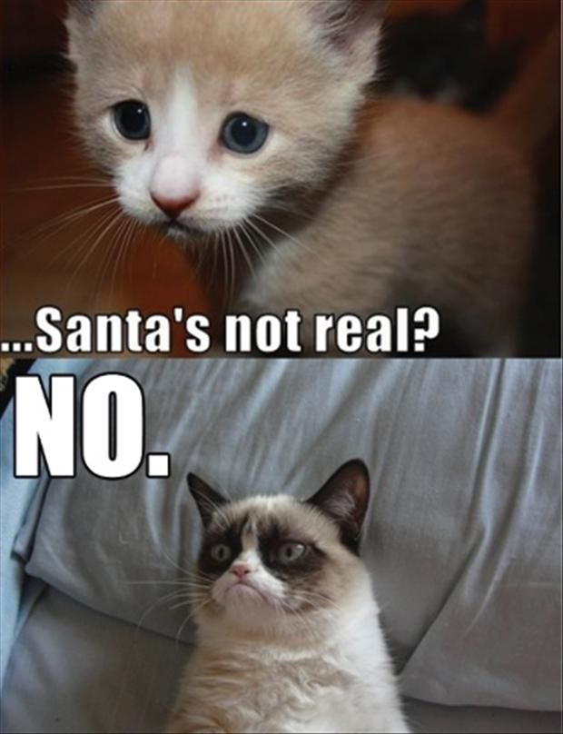 grumpy cat funny christmas pictures santa is not real no