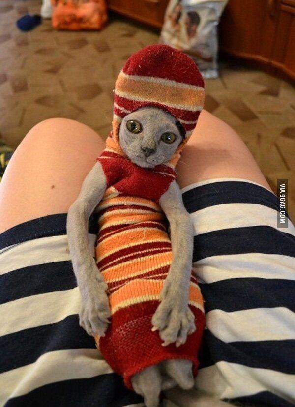 Sock Cat Dobby Cat Dobby Sock