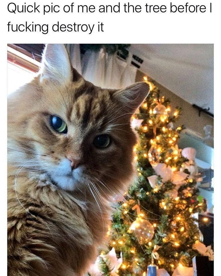 Quick selfie of me with the tree before I destroy it Cat