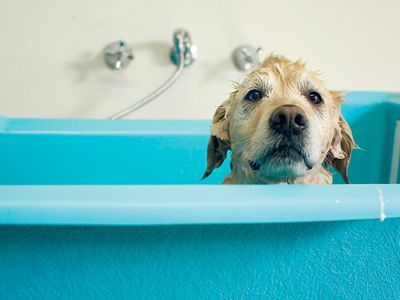 Stinky Pets and Other Hygiene Issues The Truth Revealed