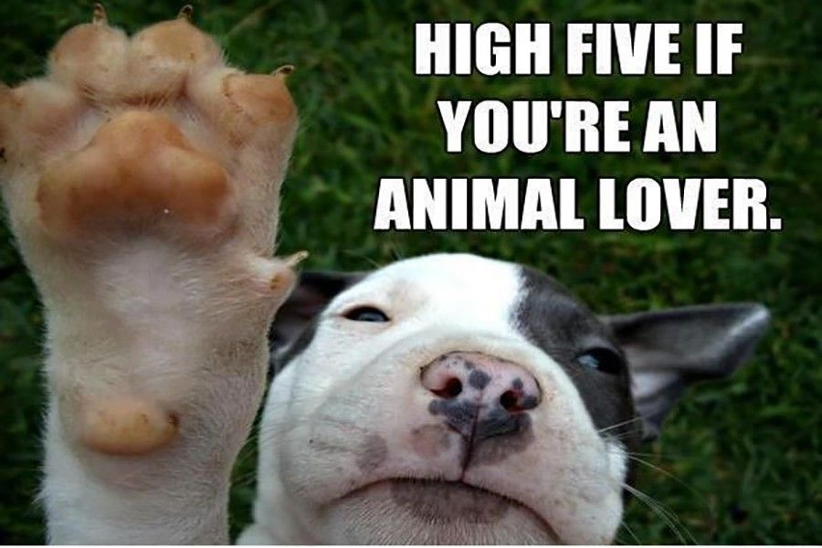 HIGH FIVE IF YOU RE AN ANIMAL LOVER