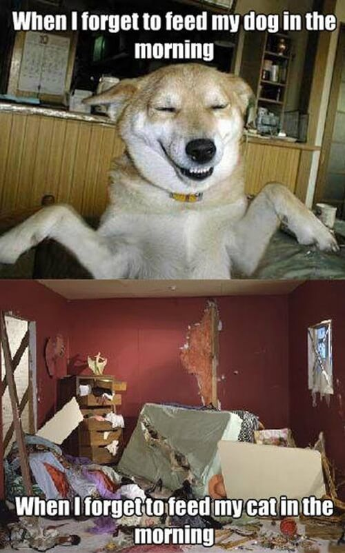 dog and cat memes 33