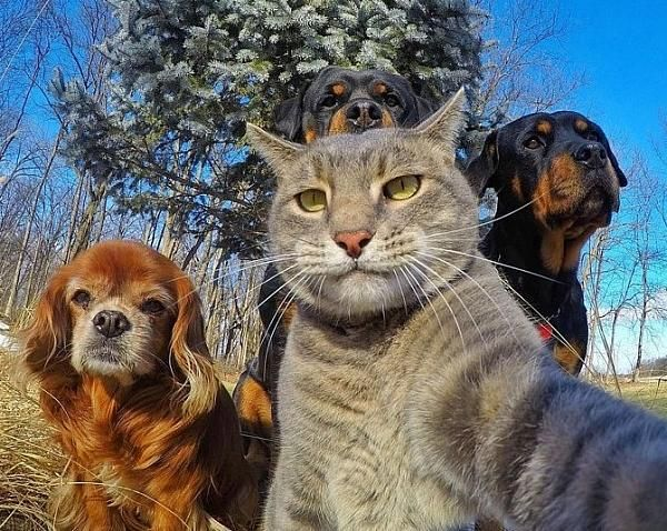 Animals taking selfie