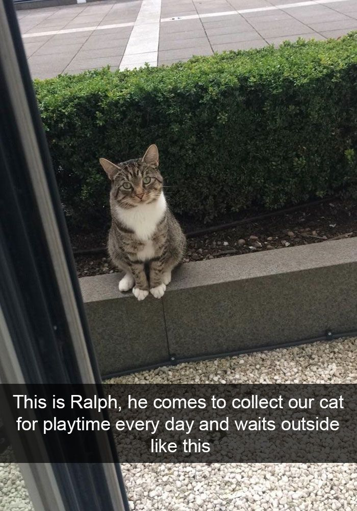 50 Hilarious Cat Snapchats That Are Im Paw Sible Not To Laugh At New Pics